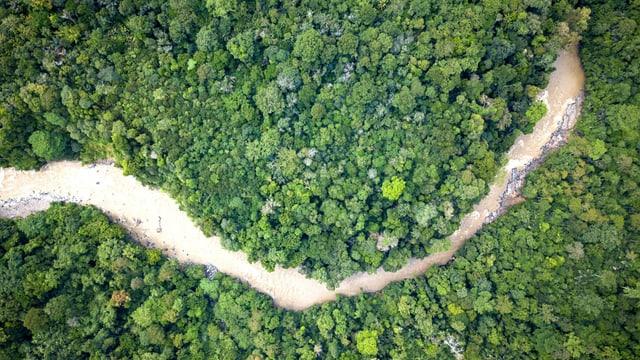 Aufnahme aus der Vogelperspektive: Ein Fluss fliesst durch grünes Dickicht des Regenwaldes.