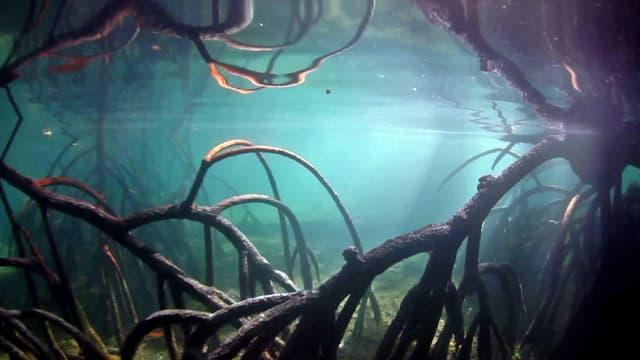 Unterwasserlandschaft im Amazonas