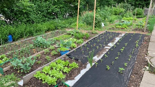 Ein Garten mit verschiedenen Beeten.