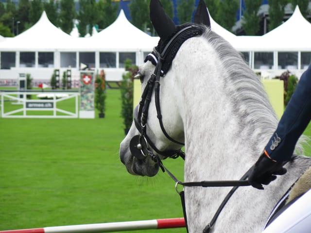 Ein weisses Pferd