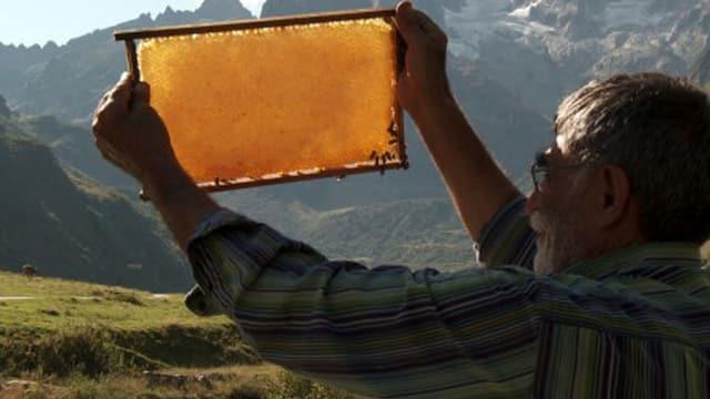 Eine Rückkehr ins Leben dank Bienen: Der kurdische Flüchtling Ibrahim Gezer im Film «Der Imker».