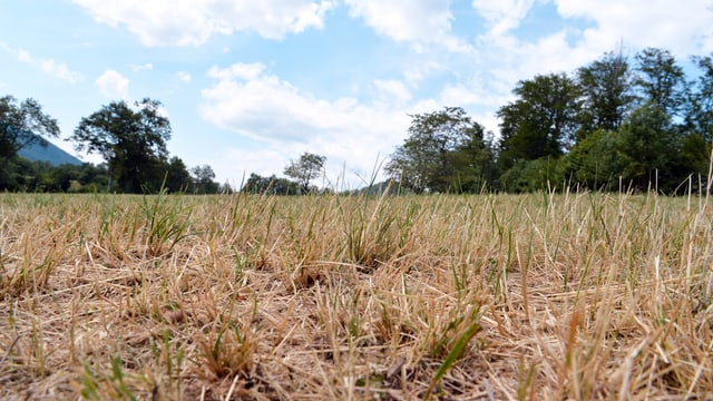 Ausgetrocknete Felder bei Bretzwil/BL.