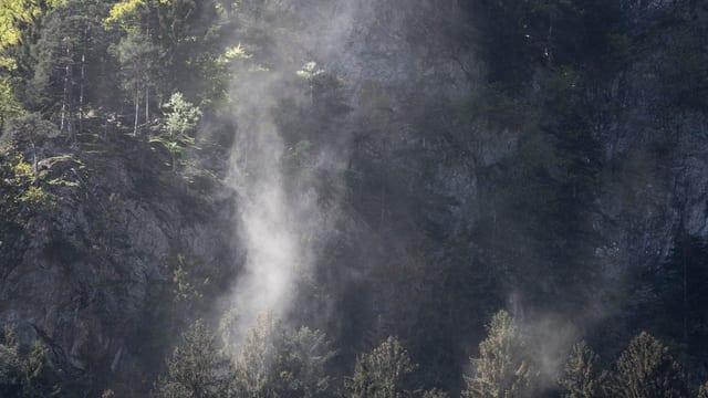 Purtret da plantas e suravi ina nebla da pollen tut mellna.