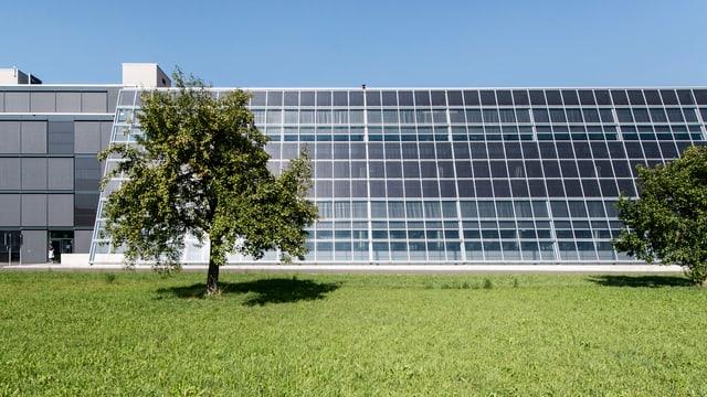 Schrägdach mit Photovoltaik-Anlage an einem Gebäude hinter einer Wiese, links und recht ein Baum.