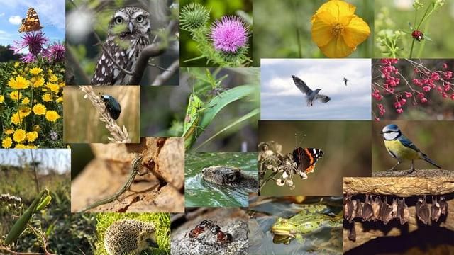 Die Vielfalt der Arten ist enorm.