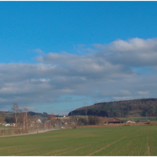 Längliche Wolkenfelder erstrecken sich über einem Wald.