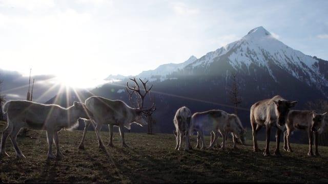 Video «Tiergeschichten (8/10): Wintergeschichten» abspielen