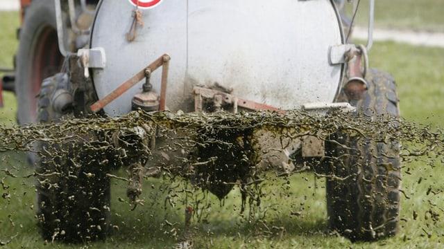 Ein Güllenanhänger von hinten photographiert verspritzt Gülle
