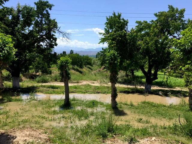 Blick auf eine grüne Landschaft mit Bäumen.