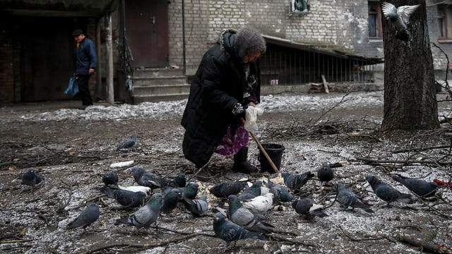 Eine alte Frau füttert Taube in der ostukrainischen Stadt Debaltsewe, im Hintergrund ein beschädigtes Haus