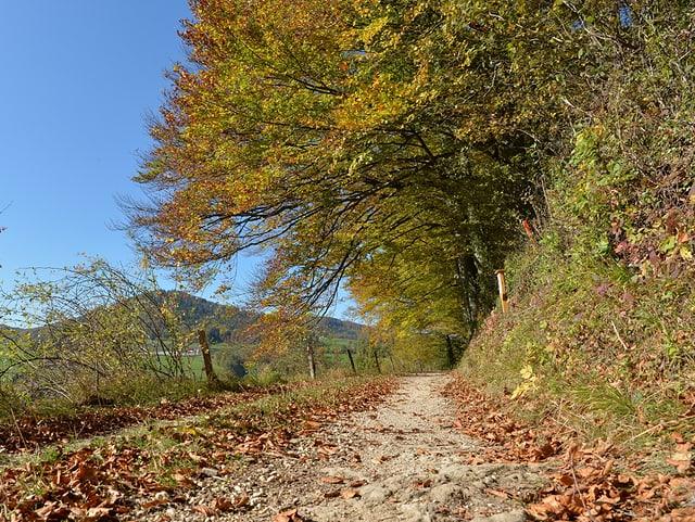 Weg mit Herbstlaub in Hügellandschaft