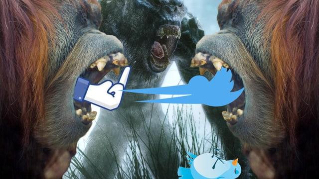 Zwei Orang Utans, die sich mit Facebook-Stinkefinger und Twitter-Vogel anbrüllen.