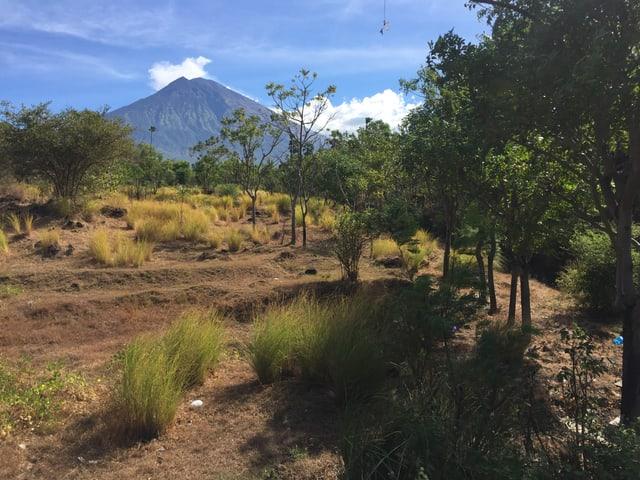 Bäume, Felder und im Hintergrund ein Vulkan.