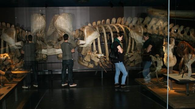 Besucher begutachten ein Skelett hinter einer Vitrine.