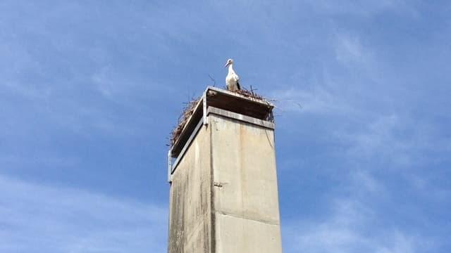 Ein Storch guckt herunter vom Kamin des Schulhauses