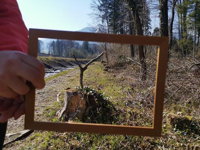 Eingerahmter Baumstrunk