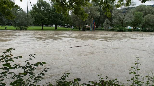 Das Wasser der Aare reicht bis zum Rasen, ist braun und mit Holz verschmutzt.