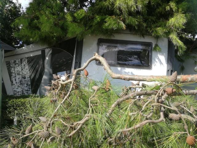 Umgekippte Bäume verdecken Wohnmobile.