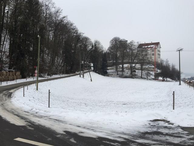 Wiese südlich von Schloss Wildenstein.