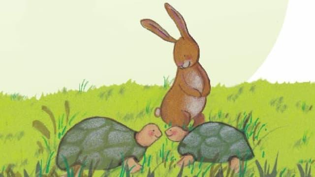Doppelhas mit Schildkröten