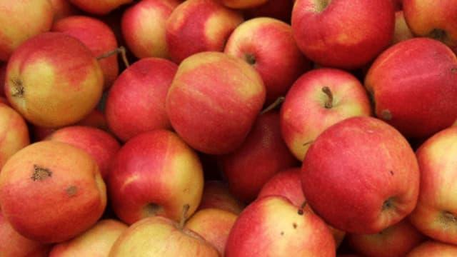 Resistente Apfelsorte lässt auf sich warten