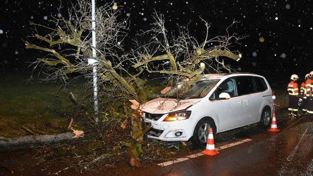 Baum liegt auf einem Auto