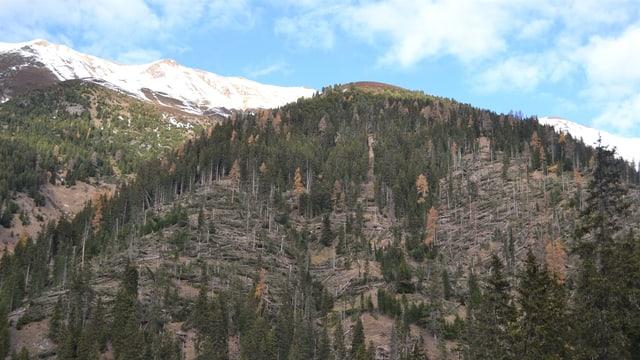 Umgeknickte Bäume im Bündner Wald.