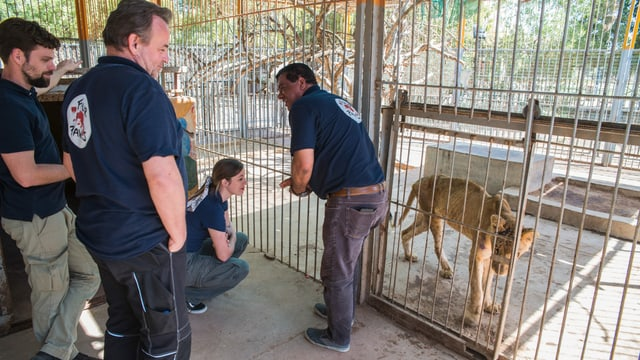 Amir Khalit mit einere Helfern vor einem Löwenkäfig. Er lacht.