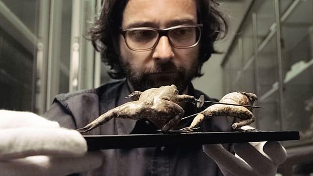 Ein Mann schaut eine kleine Skukptur an, die fechtende Frösche darstellt.