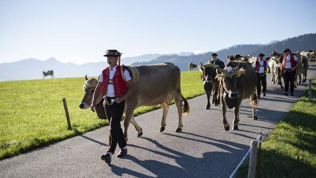 Alpaufzug zur Viehschau