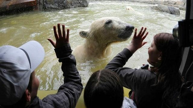 Besucher eines Zoos schauen durch eine Glasscheibe auf einen Eisbär, der im Wasser schwimmt.