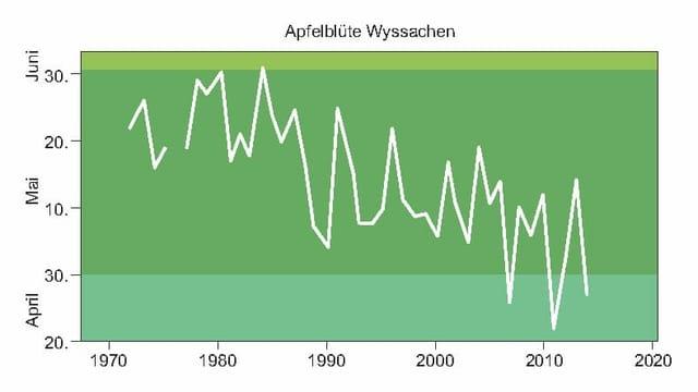 Statistik über die Apfelblüte
