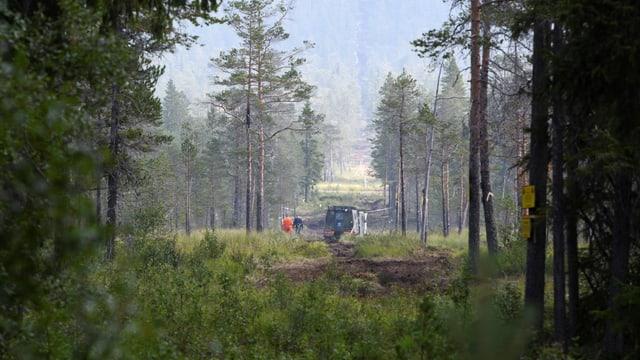 Arbeiten kreieren in einem schweidischen Wald eine Brandschneise, um die Ausbreitung der Feuer zu verhindern.