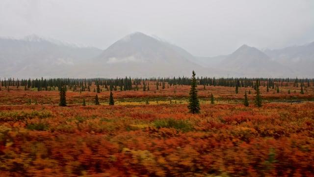 Rotfarbene Hochebene in der Nähe des Denali-Nationalparks in Alaska.