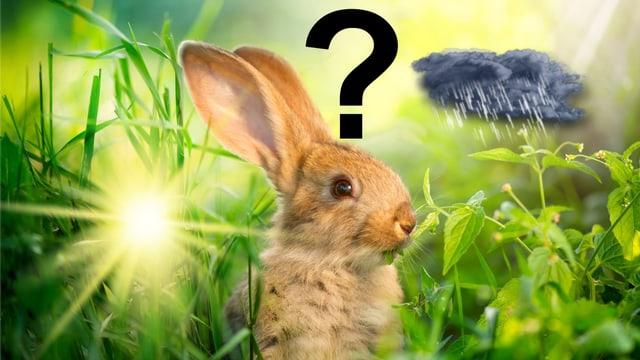 Ein Hase steht im halbhohen Gras. Links vom Hasen ist ein Sonnensymbol, rechts eine Regenwolke und über dem Hasen ein Fragezeichen.