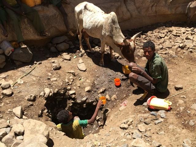 Ein Mann steht in einem Loch und gibt in Plastikbechern Wasser an einen Mann im Flussbett, ein Rind säuft.