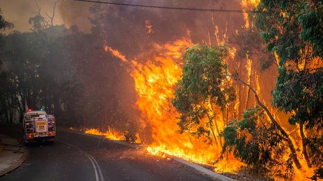 Brennender Wald in Australien. Im Hintergrund steht ein Löschwagen.