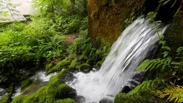 Wasser tritt aus dem Boden.