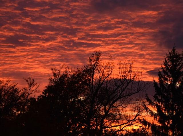 Im Vordergrund Bäume, hinten rote Wolken.