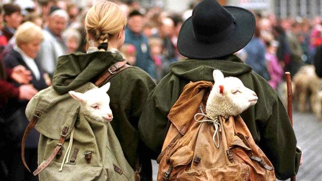 Zwei Lämmer im Rucksack von zwei Hirten.