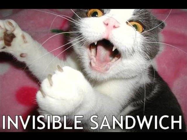 Eine Katze sperrt das Maul auf und streckt die Vorderpfoten auseinander, als würde sie in ein nicht vorhandenes, riesiges Sandwich beissen wollen.