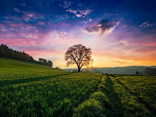 Farbenfroher Sonnenaufgang, Baum im Vordergrund.