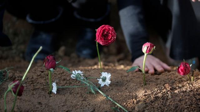 Blumen im Sand eingsteckt