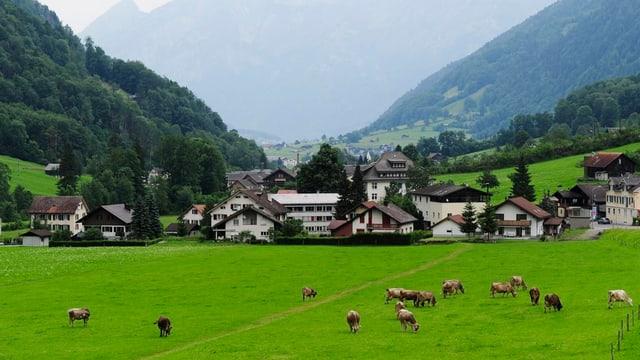 Kuhherde vor Häuser von Glarus Süd