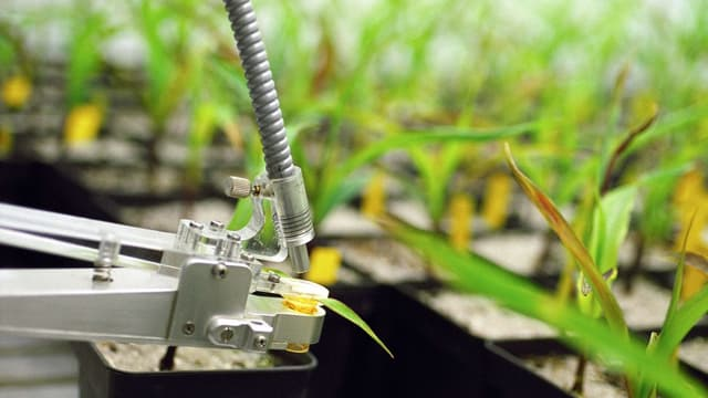 Ein Mikroskop blickt auf ein Blatt einer grünen Pflanze.