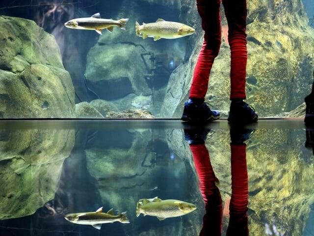 Visitader avant in bassin dal aquari.