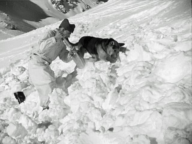 Retter mit Schaufel und daneben Schäferhung im Schnee. Sie graben beide.