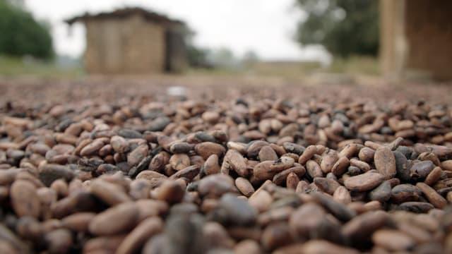 Video «Fairtrade in der Kritik. Saugroboter-Test.» abspielen