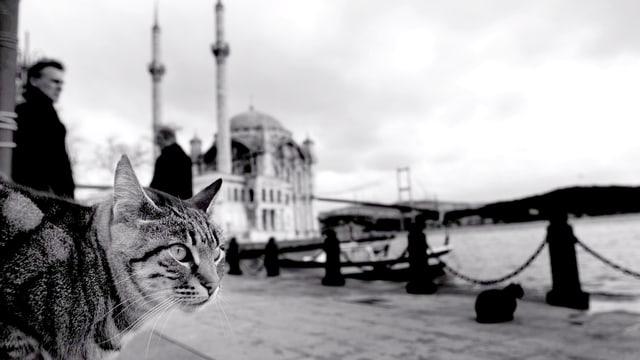 EIne Katze an einer Hafenmole, dahinter eine Moschee in Istanbul (s/w).