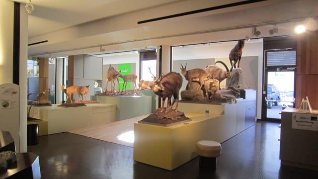 Museum da la natira exposiziun.